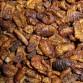 Zijderupsen (5 Liter)