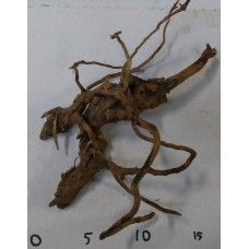 Spiderwood - Small 3