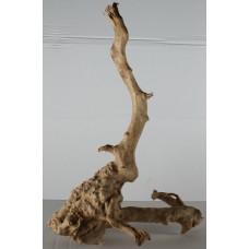 Spiderwood - 112