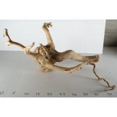 Spiderwood - 125