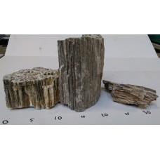 Versteend hout (Prijs per KG)